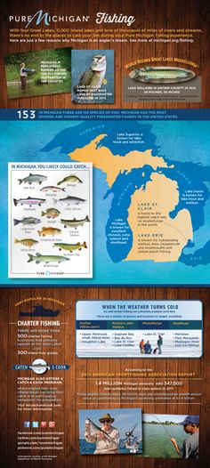 Pure Michigan Fishing   ...*There is also good walleye fishing in many Upper Peninsula lakes and along the northern coast of Lake Michigan.