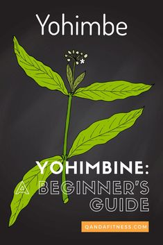 Yohimbine is a popular weight loss supplement but how does it actually work? Check out our beginners guide to Yohimbine at here - QandA Fitness - #fitness #supllements #yohimbine #WeightLossHelp Low Blood Pressure, Health Research, Nerve Pain, Weight Control, Weight Loss Supplements, Reduce Weight, Body Weight, Medical