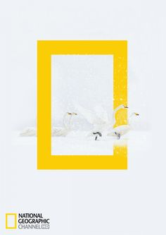 The Print Ad titled Swans was done by Acc Granot Israel advertising agency for National Geographic in Israel. Personality Archetypes, Brand Archetypes, Dope Wallpapers, Slot Online, Cover Pages, Bookbinding, National Geographic, Advertising, Graphic Design