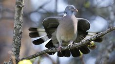 Sepelkyyhky Science And Nature, Pigeon, Bird Houses, Finland, Natural Beauty, Birds, Animals, Animaux, Birdhouses