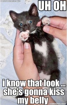 Cute Kittens Pinterest Cute Baby Kittens And Cats