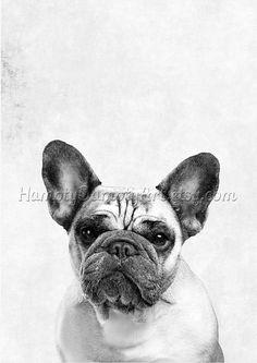 Bulldog animal print Dog art Photography art by HamptyDamptyArt