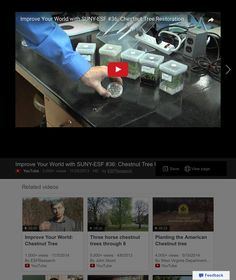 SUNY - ESF Video re American Chestnut tree restoration efforts