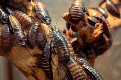 How to Identify a Cockroach | Terminix Blog