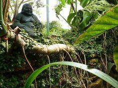 Buddha in the tropics