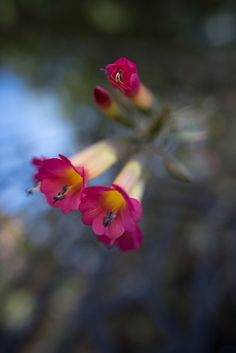 The Area Around Lake Titicaca in Peru and Bolivia - Travelhackers Lake Titicaca Peru, Bolivia, New Pictures, Most Beautiful, World, Flowers, Plants, The World, Flora