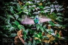 Hummingbird portrait by mrg_photoimaging via http://ift.tt/29puUhM
