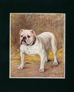 ANTIQUE Dog Print 1907 Bulldog Dog by Frances Fairman