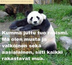Panda Bear, Quotes, Animals, Quotations, Animales, Animaux, Panda, Animal, Animais