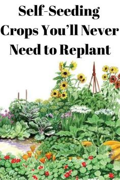 Some crop plants are self-seeding. With a bit of light management each generation can be coaxed into providing seeds season after season. garden ideas new zealand Self-Seeding Crops You'll Never Need to Replant Veg Garden, Edible Garden, Lawn And Garden, Garden Plants, Garden Sets, Fruit Tree Garden, Garden Works, Backyard Plants, Forest Garden