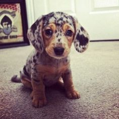 Its a leopard print puppy!!! I WANT ONE