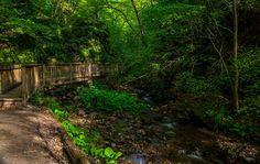 Parfreys Glen Trail Photograph