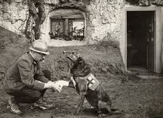A WWI allied soldier bandages the paw of a Red Cross working dog in Flanders, Belgium, May 1917.  We want to hear your dog stories - how Devoted is your dog? Tell us on National Geographic Your Shot. PHOTOGRAPH BY HARRIET CHALMERS ADAMS, NATIONAL GEOGRAPHIC