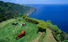 Beautiful countryside.. my amazing Sao Miguel fly with @SATA Airlines for an unforgettable holiday!
