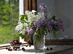 Fotografia Lilac and cherry de Elena Pankova na 500px