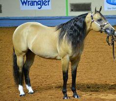 The late Quarter Horse Stallion Definitely Hollywood