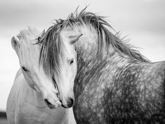 horse / sweet moment