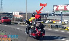 Here are photos of dogs riding on motorcycles... do you think this is safe???