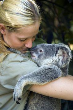 I want to go to Australia and hold a koala bear!