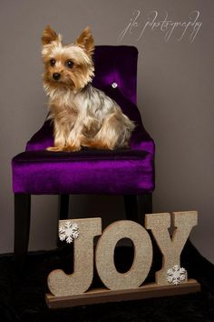 Meet Carter, a Petfinder adoptable Yorkshire Terrier Yorkie Dog, Baton Rouge, LA - Adoption Fee: $375Fostered in LouisianaAge: 4 yearsWeight: 4.9 lbs.12/2/14 - Carter will begin his...