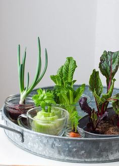 How to Regrow Vegetable Scraps - Simple Bites Turn your compost into a windowsill edible garden. Regrow Vegetables, Chicken And Vegetables, Growing Vegetables, Veggies, Planting Vegetables, Veg Garden, Edible Garden, Apartment Vegetable Garden, Sustainable Food