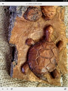 Bark carving of a turtle