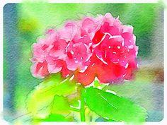 Pink Hydrangea Love