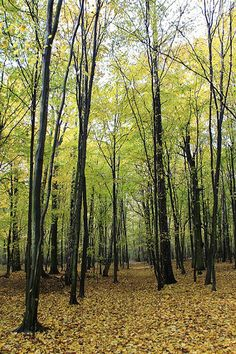 Las Kabacki Nature Reserve - Warszawa, Poland