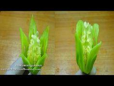 Pepperoncini Carving,Lotus &Tulip,Lessons 25 for Beginners,แกะสลัก พริกหยวก เป็นดอกทิวลิป และ ดอกบัว - YouTube