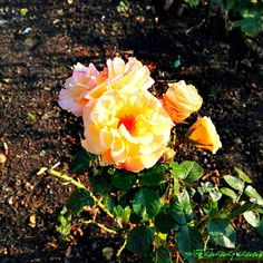 Typing without a thumb is stupid  So here have a wonderful flower to enjoy!    Tippen ohne Daumen ist doof  Also hier: eine wunderschöne Blume zur Erfreuung!   #vegansofgermany #swissvegan #potanana #eatgreen #eatlocalgrown #eatyourgreens #powerdedbyplants #plantbaseddiet #healthylunchideas #fitfoods #seasonalfood #eatseasonal #eatarainbow #gesunderezepte #abnehmen2017 #veganwerdenwaslosdigga #食べたい #healthylunch #healthyfoods #ランチタイム #vegetarianfood #natureshot #naturfoto #flowery #blume #性質…