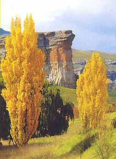 The Mushroom Rocks in the Golden Gate Highlands National Park Landscape Paintings, Oil Paintings, Out Of Africa, World View, What A Wonderful World, Golden Gate, Wonders Of The World, Beautiful Places, Paisajes