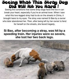 Seeing What This Stray Dog Did Will Hit You Hard!