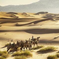 Photo by @irablockphoto (Ira Block)  Bactrian camels ride across Mongolia's south Gobi Desert near Khongoryn Els