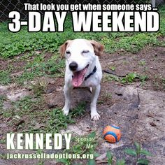 Georgia Jack Russell Rescue, Adoption and Sanctuary | Kennedy