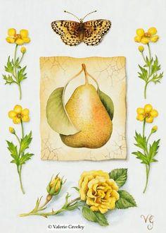 pears- Valerie Greeley