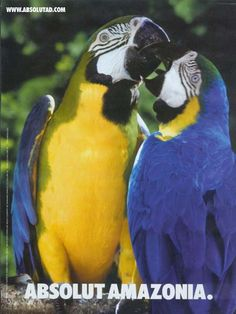 #No Copy Ad #Clever Advertising #Creative Advertising #Conceptual Advertising  Two parrots.