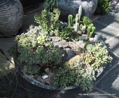 With a little bench, a few pots, and miniature garden tools, this beautiful container of succulents and cacti at Longwood Gardens could be an amazing little landscape. The rocks make awesome scale boulders.
