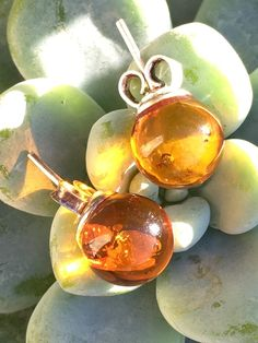 Sterling Silver Baltic Amber Stud Earrings Poland - Yourgreatfinds, Vintage…