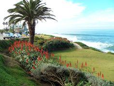 augustjordan Golf Courses, Plants, Photos, Pictures, Plant, Planets