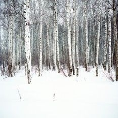 56 ideas birch tree photography winter aspen for 2019 Winter Scenery, Winter Trees, Tree Photography, Winter Photography, Aspen Trees, Birch Trees, Birch Forest, Snow Forest, Photo Tree