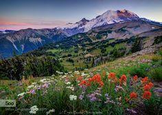 Mt. Rainier Bouquet by ErwinBuske