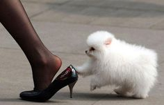 A little dog plays with a woman wearing high-heeled shoes on the street in Chongqing, China