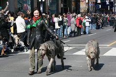 Celebrate St. Patrick's Day With These Irish Dog Breeds