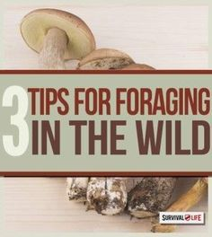 Primitive Survival Skills: Foraging for Food and Water | Survival Knowledge On How to Gather Edible Plants & Food When in Wilderness By Survival Life http://survivallife.com/2015/02/27/primative-survival-skills/bbgffvchg2sxz