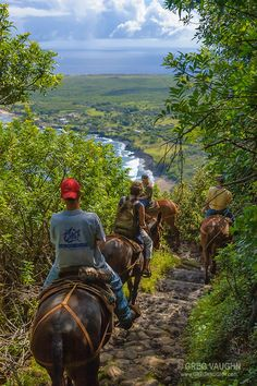 Molokai Mule Ride to Kalaupapa National Historic Park, Molokai, Hawaii