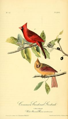 v 3 - The birds of America : John J Audubon, 1840 - Biodiversity Heritage Library