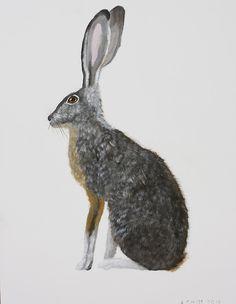 Field Rabbit / Anne Siems