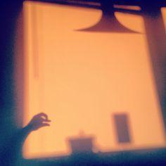 Shadow bird