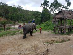 Les éléphants en Thaïlande, sur l' île de Koh Samui.   #exploringtheglobe  #instatraveling #travelphotography #backpacking #worldtrip