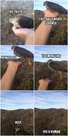 "A Flock of 45 Memes About Birds That Might Make Things a Little Hawkward - Funny memes that ""GET IT"" and want you to too. Get the latest funniest memes and keep up what is going on in the meme-o-sphere. Stupid Funny, Funny Cute, The Funny, Hilarious, Funny Stuff, Funny Animal Pictures, Funny Images, Funny Animals, Cute Animals"